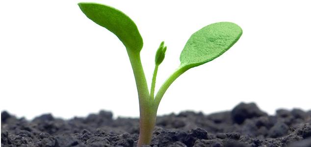 Внешний рост и внутренне развитие компании
